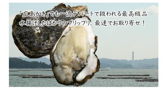 「広島かき」でも一流デパートで扱われる最高級品